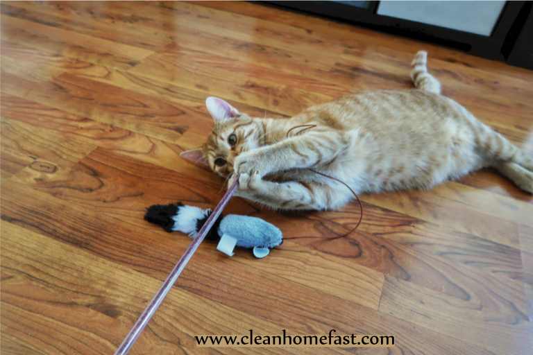Best Safe Cleaners List In Home With Cats