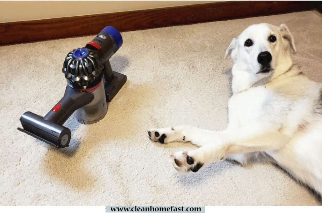 why-are-dogs-scared-of-vacuums