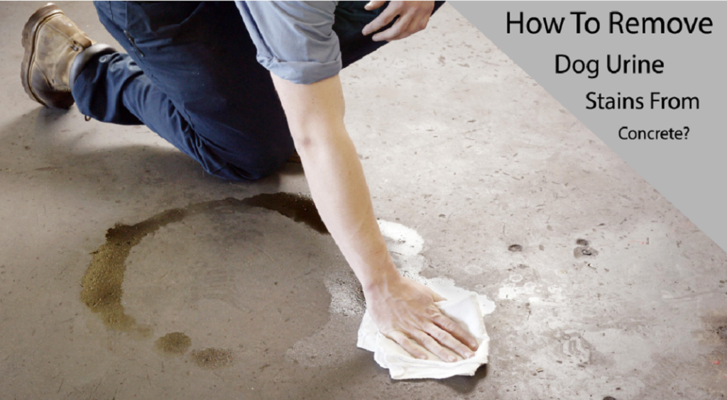 How To Remove Dog Urine Stains From Concrete?